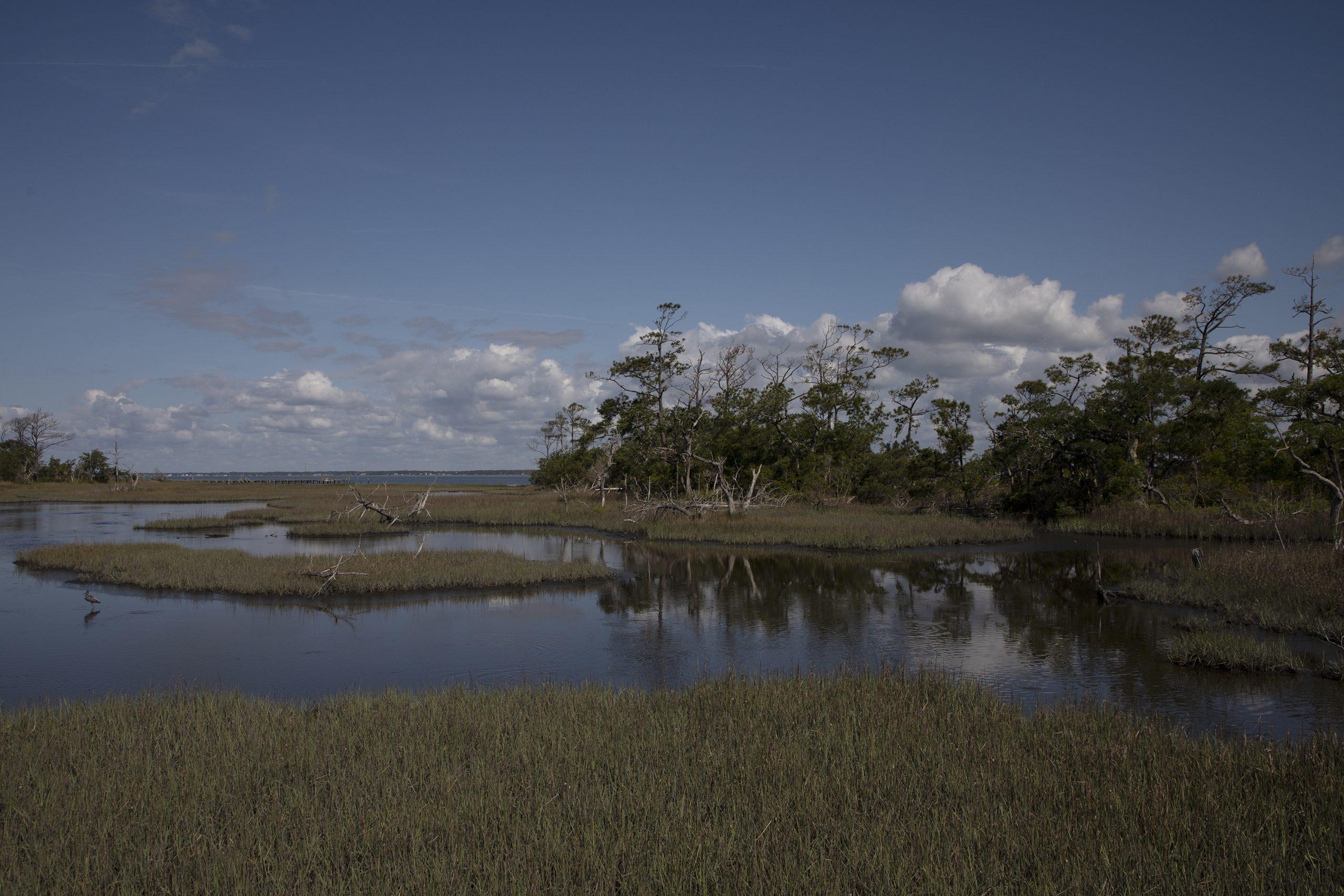 Photo of a salt marsh off the coast of North Carolina.